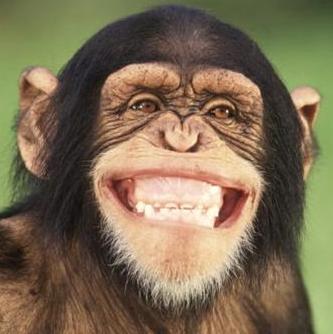 grinning chimp1